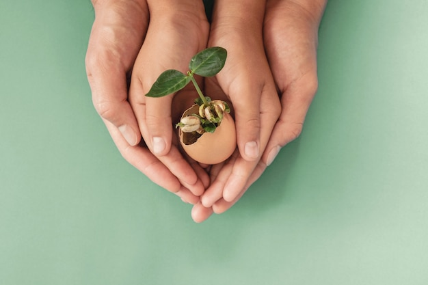 Hands holding seedling in eggshells, montessori education , csr corporate social responsibility