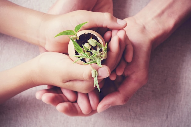 Hands holding seedling plants in eggshells, eco gardening,  montessori education concept