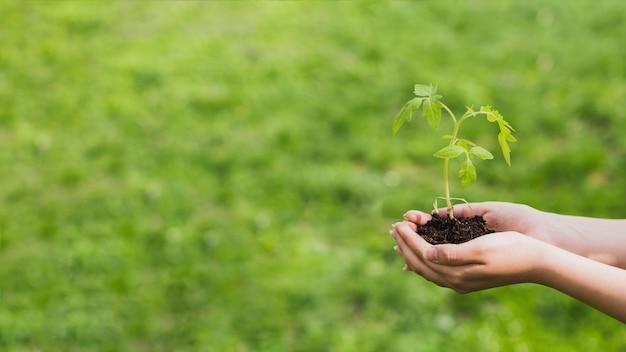 작은 식물을 들고 손