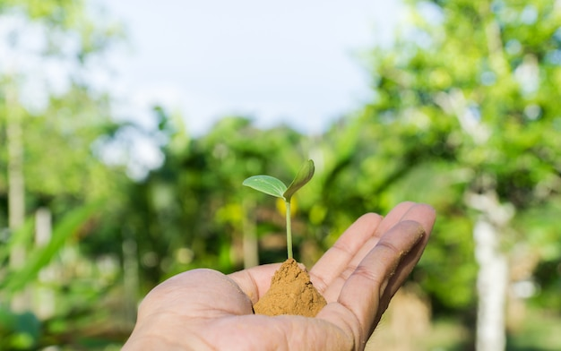 Hands holding small trees growing.