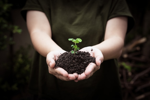 Hands holding soil with planting young tree, go green symbol