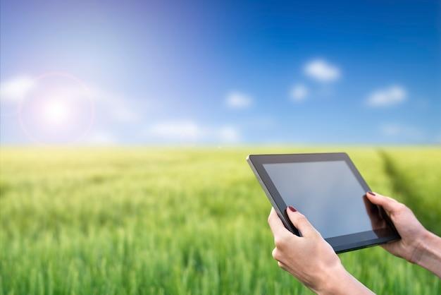 밀 필드에 태블릿 컴퓨터를 들고 손입니다. 똑똑한 농업. 농업에서 현대 기술을 사용합니다.