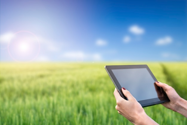 Hands holding tablet computer in the wheat field. smart farming. using modern technologies in agriculture.