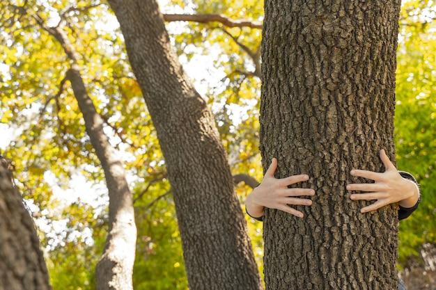 日光で自然の背景をぼかす上に木を持っている手エコアースデイコンセプトエコフレンドリー