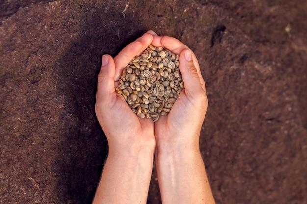 손에 들고 토스트 유기농 커피 콩-coffeea arabica