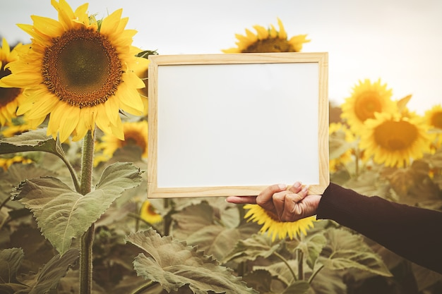 Hands holding whiteboard on sunflower background