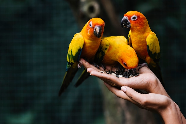 Hands holding wild birds in a zoo