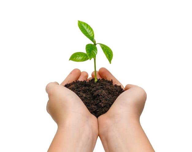 흰색 배경에 고립 된 젊은 녹색 식물을 들고 손. 환경 보호 개념입니다.