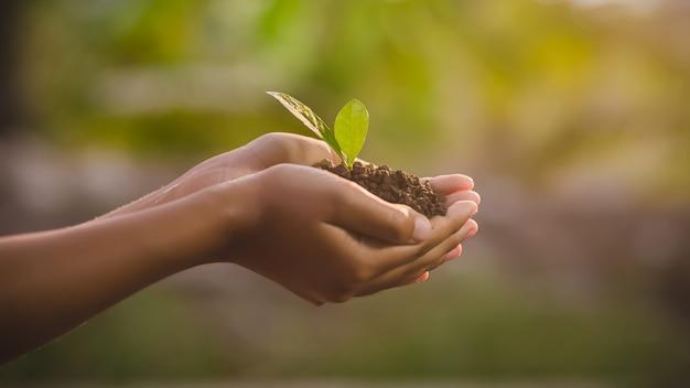 自然の中で若い植物を保持している手