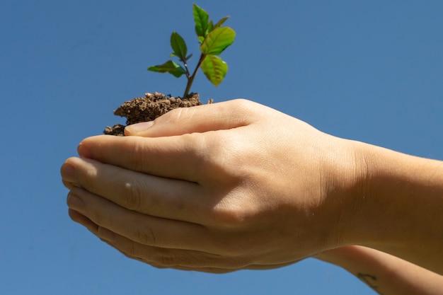 Руки, держащие молодое растение на размытом фоне зеленой природы с солнечным светом