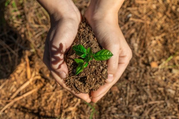 日光とぼやけた緑の自然の背景に若い植物を保持している手