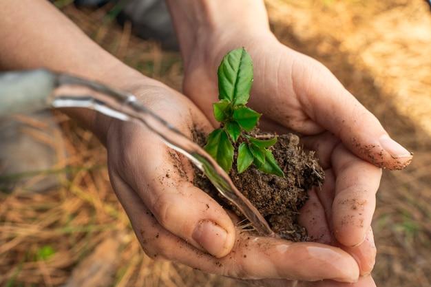 日光と水でぼやけた自然の背景に若い植物を保持している手