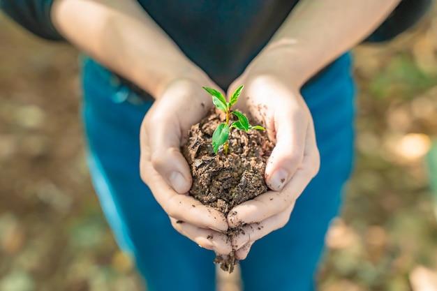 日光で自然の背景をぼかす上に若い植物を保持している手エコアースデイコンセプトエコフレンド