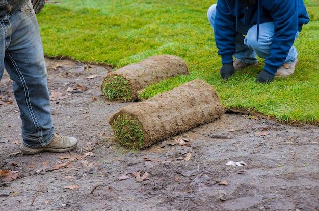 Руки в садоводстве кладут зеленые травы в рулонах, устанавливая на лужайке