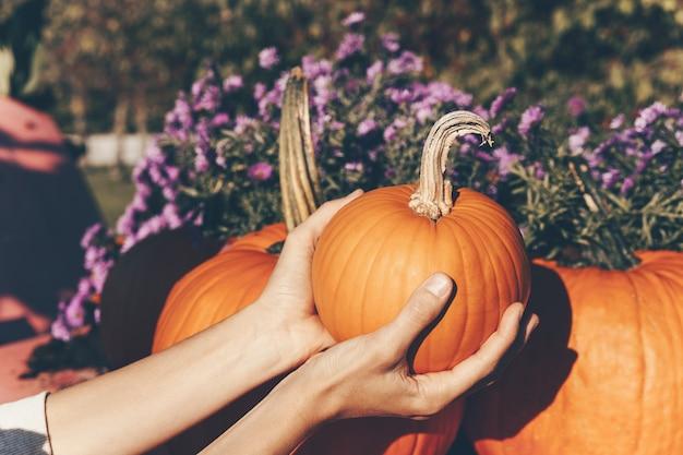 Руки держат оранжевую тыкву на фермерском рынке или сезонном фестивале. осенний урожай тыкв.