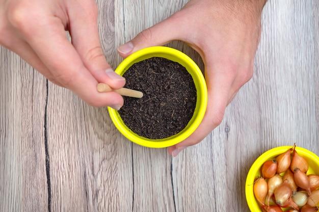 手はタマネギを植えるために土に穴を開けます、クローズアップ。家庭で有機野菜を植える。