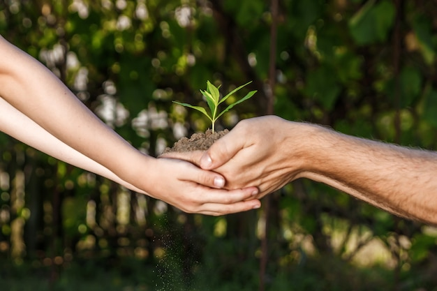 Hands of a man and child holding a young plant against a green natural in spring