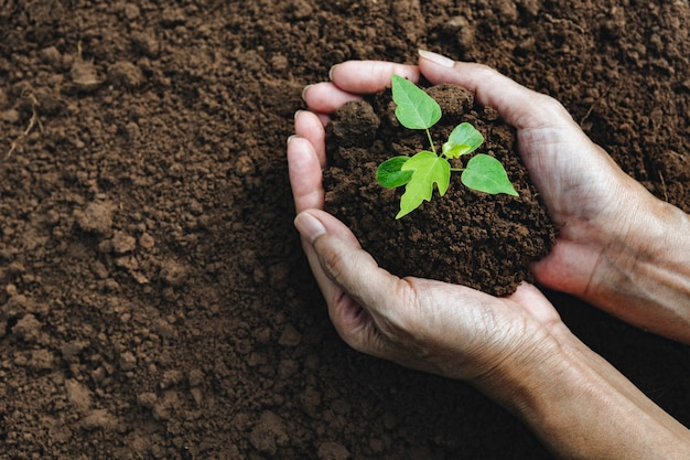 Hands of man holding soil with plant