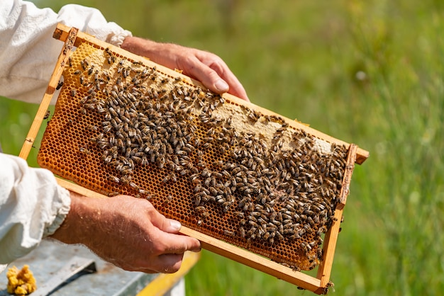 Hands of a man holds a frame with honeycombs for bees in the garden at home