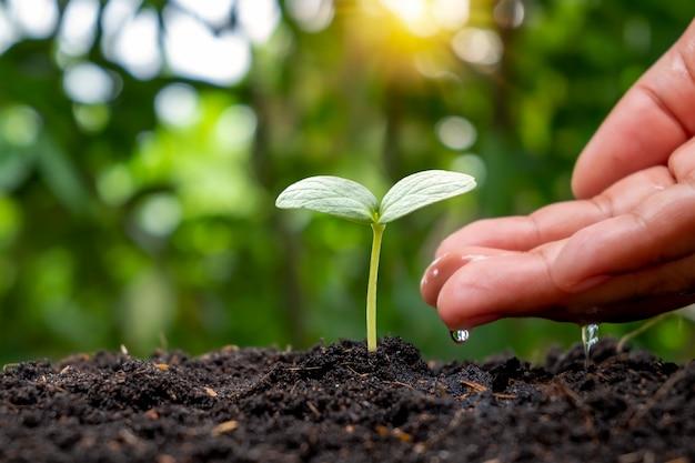 Руки питают растения и поливают детские растения, которые естественным образом растут на плодородной почве.