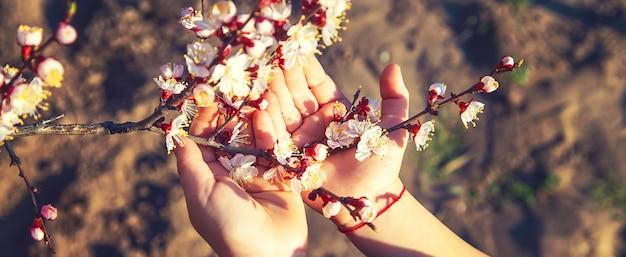 Руки ребенка, держащего ветку цветущего дерева. выборочный фокус. природа.