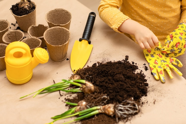 子供の手が自宅で屋内花球根の種を植えました