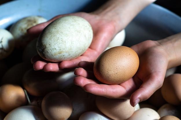 大きなアヒルと鶏の卵を持っている田舎の女の子の手がクローズアップ