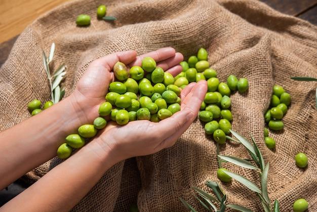 Руки фермера, держащего органические зеленые оливки для приготовления оливкового масла на коричневом тканевом мешке