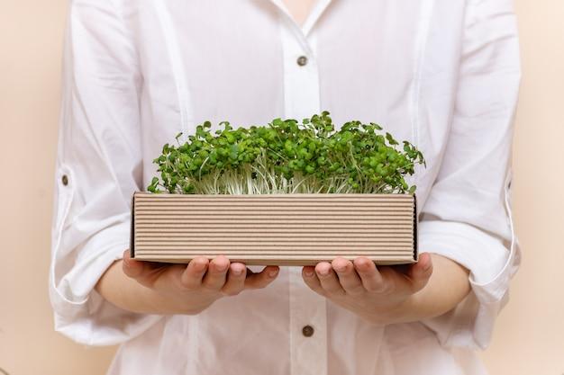 マスタードもやしの有機マイクログラムで作られたエコボックスを持っている若い女性農家の手。成長するもやし。有機製品。