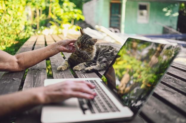 Руки пожилой пожилой женщины гладят пушистую уличную кошку и работают на ноутбуке онлайн на открытом воздухе в летнем саду. отражения деревьев на мониторе компьютера