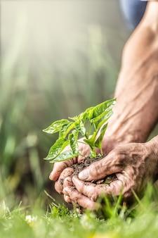 손바닥 가득 흙과 묘목을 흙에 넣기 직전에 들고 있는 노인의 손. 녹색 환경과 손에 있는 묘목으로 표현되는 지속 가능성의 배너 보기.