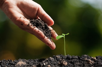 Hands of farmer growing and nurturing tree on nature  background