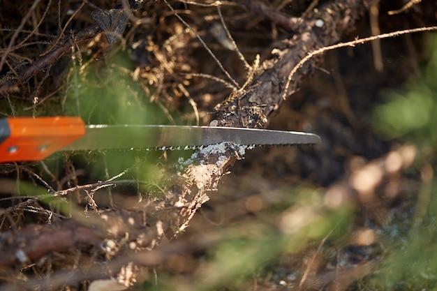 オレンジ色の手袋をはめた庭師の手が、日焼けした生け垣のはさみを使って、生い茂った緑の低木を刈っています...