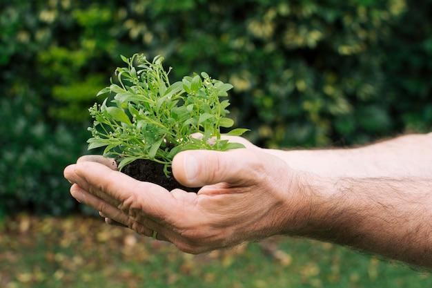 小さな苗木を持つ男の手