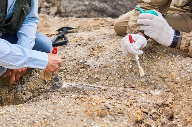 砂漠で見つかった化石の骨を掃除する古生物学者の手