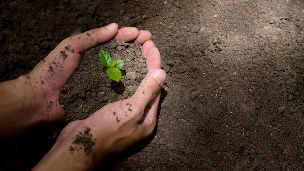 농부의 손이 묘목을 흙에 심고 있습니다. 개념 녹색 세계 지구의 날