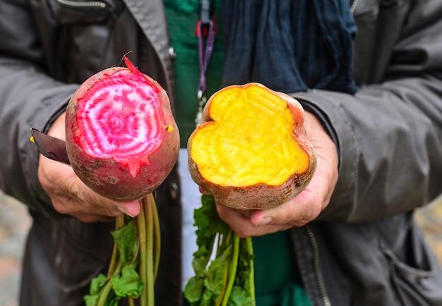 시장에 분홍색과 노란색 사탕무를 보관하는 정원사의 손