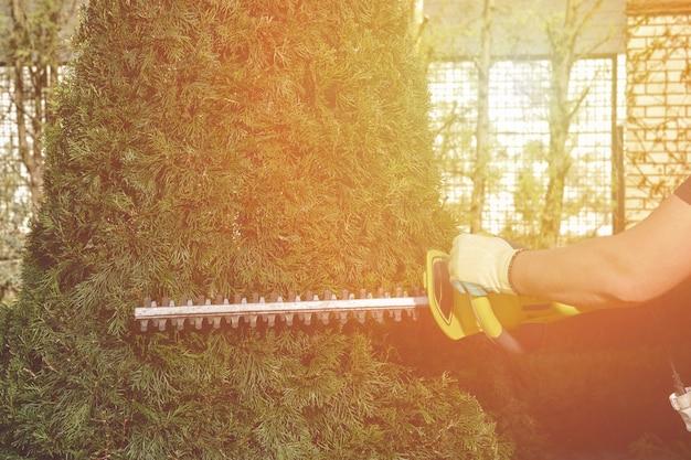 手袋をはめた未知の庭師の手が、日当たりの良い場所で生け垣トリマーで生い茂った緑のクロベをトリミングしています...