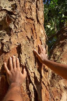 Передает текстуру большого дерева в солнечный день Premium Фотографии