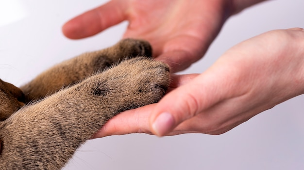 Hands and paws of a cat on a white background friendship concept