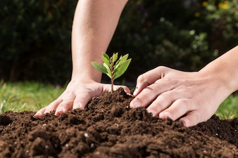 Hands planting a plant to grow