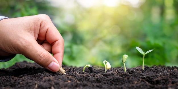 植物の発芽、植物成長の概念の順序で土壌に成長する種子や木で植物を植える手。