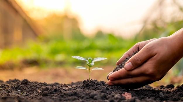 비옥 한 토양과 녹색 배경 세계 환경의 날 개념에 묘목을 심거나 식물 묘목을 심는 손.