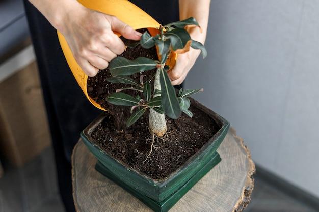 緑の植木鉢の手鉢植え