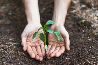 Hands protecting plant