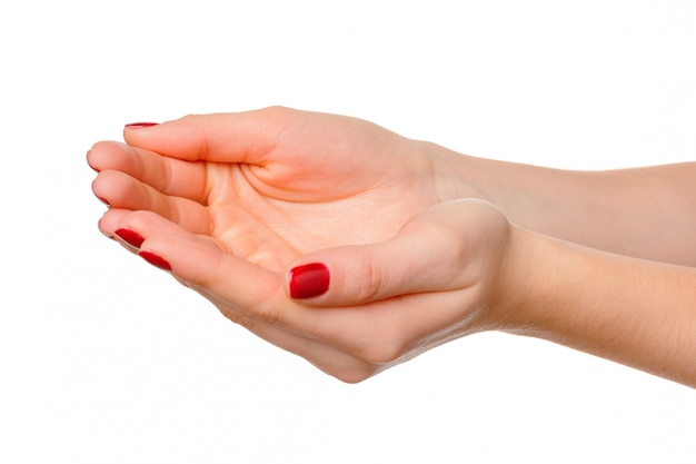 Hands take gesture of open palm for holding on whites, isolated