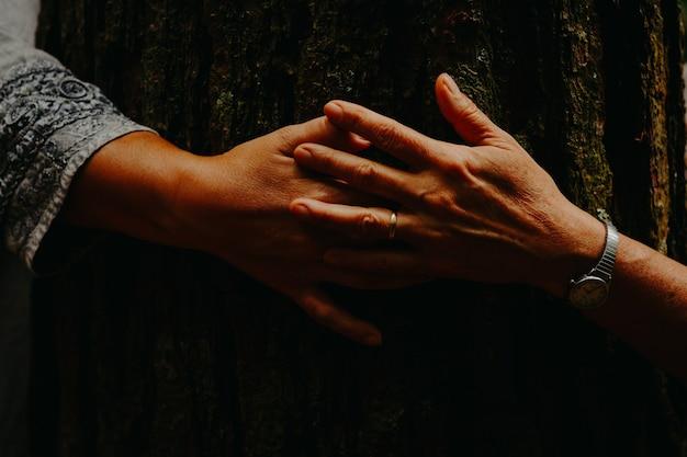 Руки касаются старого дерева, солнечный свет.