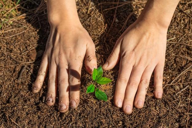 日光で庭の若い緑の植物に触れる手