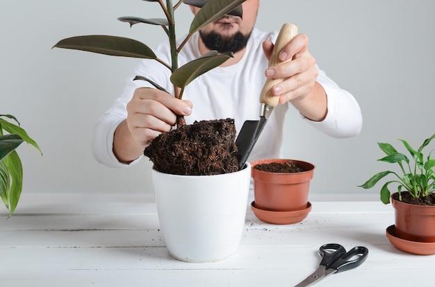 観葉植物を新しい鉢に移植する手。家の園芸の概念