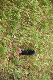 Hands of unrecognizable photographer hiding in thick vegetation and holding camera